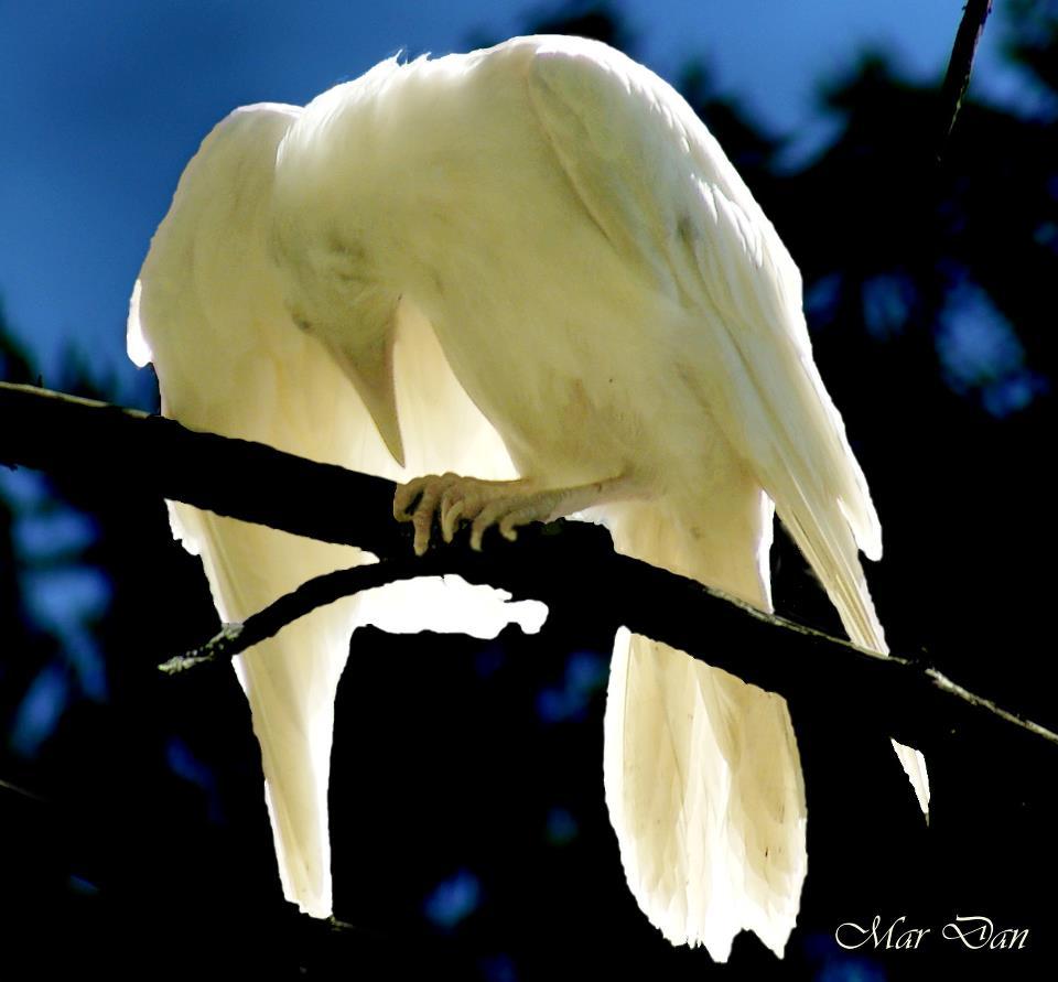 Winged Moonlight